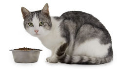 Hungry cat Stock Photography