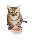 Hungry Cat With Bowl of Food Royalty Free Stock Photo