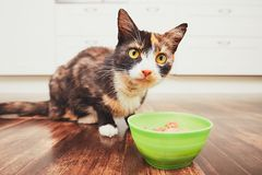 The hungry cat eating from bowl Stock Photography