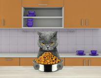 Hungry cat with food bowl sitting in kitchen and ready to eat. Hungry cat with food bowl sitting at dining table in kitchen and ready to eat Royalty Free Stock Images
