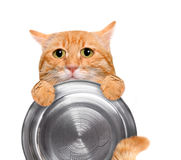 Hungry cat holding food bowl . Stock Photography