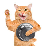 Hungry cat holding food bowl . Royalty Free Stock Photography