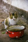 A hungry cat. With a dirty pot Royalty Free Stock Photos