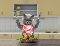 Hungry cat sitting at the table and going to eat chicken. Hungry cat with knife and fork for dinner sitting at the table and going to eat chicken Royalty Free Stock Photo