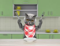 Hungry cat with knife and fork for dinner sitting at the table in the kitchen. Hungry cat with knife and fork for dinner sitting at the table Stock Photography