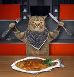 Cat eats fish in the kitchen 2 stock photos