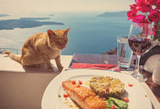 Hungry cat looks at a plate of fish Stock Photo