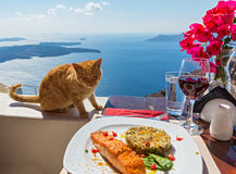 Hungry cat looks at a plate of fish Stock Image