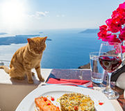 Hungry cat and a plate of fish Royalty Free Stock Images