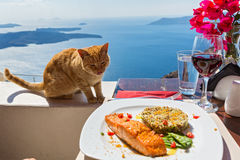 Hungry cat and a plate of fish Royalty Free Stock Photo