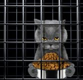 Hungry cat is punishe in cage. Of prison Royalty Free Stock Photo
