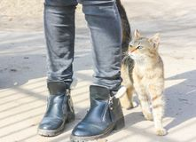 Hungry cat rubs against the legs of a passerby. Street cat at hi. S feet Royalty Free Stock Image