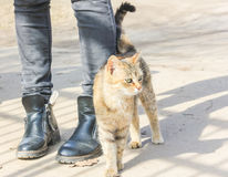 Hungry cat rubs against the legs of a passerby. Royalty Free Stock Photo