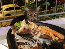 Hungry cat. A cat watching a tray of fish Stock Photography