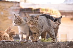 Hungry cats Stock Photography