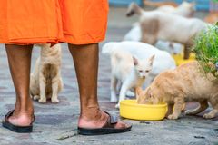 Hungry cats during a meal and the feet of a good monk in the str. Eet of Thailand Stock Photography