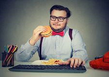 Hungry chunky man eating burger at workplace. Obese man in glasses eating fast food while working in office and overeating Stock Images
