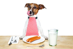 Hungry dog. Dog on a covered table and smacking and hungry stock images