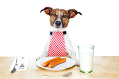 Hungry dog Stock Image