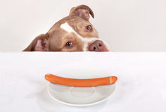 Hungry dog begging Royalty Free Stock Photography