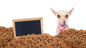 Hungry dog  behind mound food Stock Photos