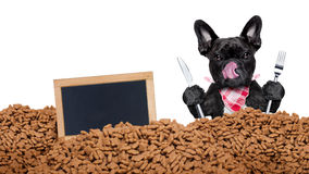 Hungry dog  behind mound food Stock Photo