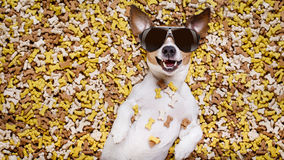 Hungry dog in big  food mound Royalty Free Stock Photos