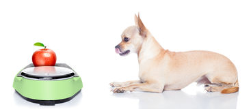 Hungry dog with bowl Royalty Free Stock Photography