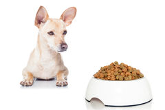 Hungry dog with bowl Stock Image