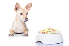 Hungry dog with bowl Stock Images