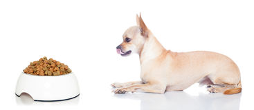 Hungry dog with bowl Royalty Free Stock Photo
