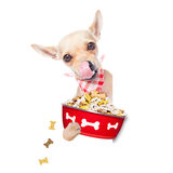 Hungry dog bowl Stock Image