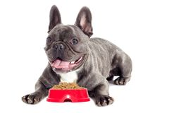 Hungry dog and dry food Royalty Free Stock Images