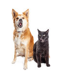 Hungry Dog and Cat Together Tongues Out. Funny hungry large dog and black cat licking lips Royalty Free Stock Image
