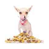 Hungry dog Royalty Free Stock Photo