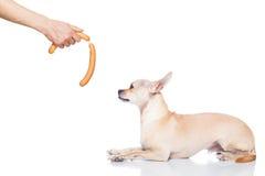 Hungry dog Royalty Free Stock Photos