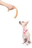 Hungry dog Stock Photos