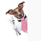 Hungry dog. With cutlery waiting for the meal royalty free stock photos