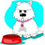 Hungry dog & empty dish. This sad little pooch wants a second helping of kibble and her dish is empty Stock Photo