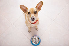 Hungry dog with food bowl Royalty Free Stock Images