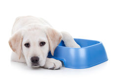 Hungry Dog. With food bowl. Hunger and nutrition stock images