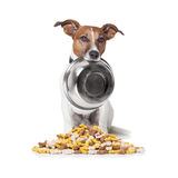 Hungry dog food bowl Stock Photography