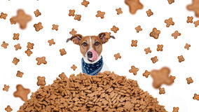 Hungry dog  in  a food rain Royalty Free Stock Image