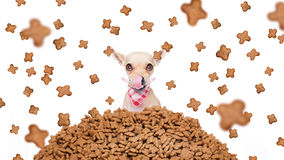 Hungry dog  in  a food rain Stock Photo
