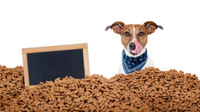 Hungry dog  in  a food rain Royalty Free Stock Photography