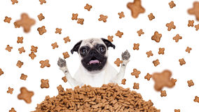 Hungry dog  in  a food rain Stock Images