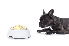 Hungry dog with healthy bowl Royalty Free Stock Images