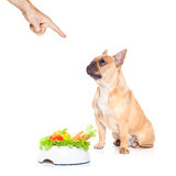 Hungry dog with healthy bowl Stock Photos