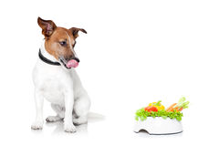 Hungry dog with healthy bowl. Jack russell dog  with  healthy  vegan food bowl, isolated on white background Stock Photo