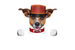 Hungry dog with healthy bowl. Jack russell dog  with  healthy  vegan food bowl, isolated on white background Stock Image